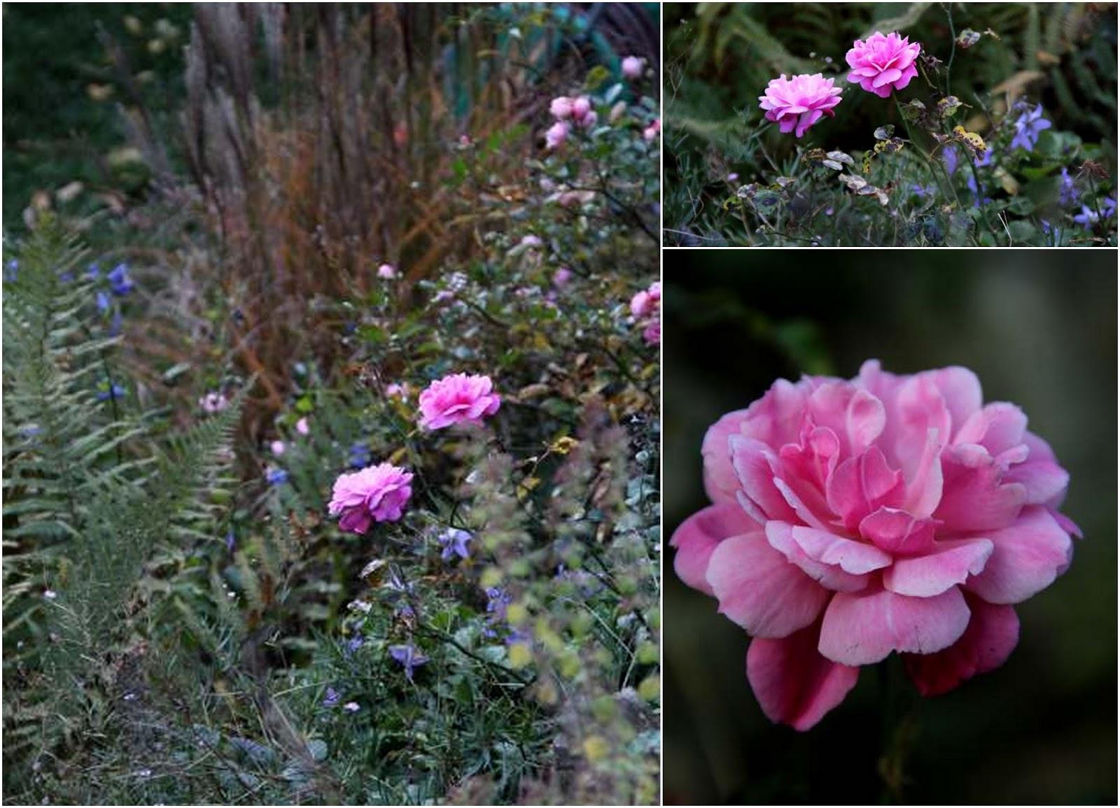 Fleurs d 39 automne de belles esp ces qui fleurissent for Fleurs automne
