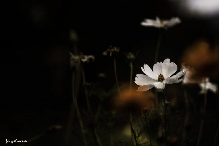 imagesFleurs-d-automne-18.jpg